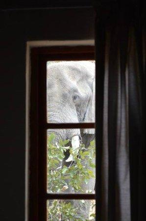 Silonque Bush Estate & Spa : Een olifant bij het raam