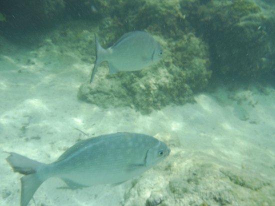 Melia Nassau Beach - All Inclusive: Snorkeling on Cable Beach