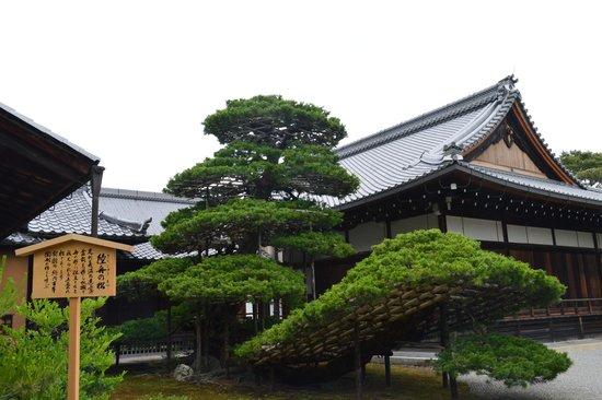 Kinkaku-ji (Goldener-Pavillon-Tempel): A art of tree created by the monk