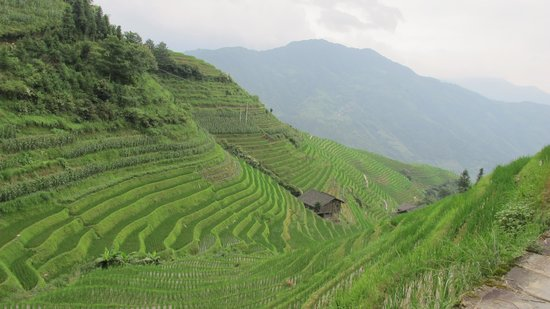 Ping'an Village : Drangon's Backbone Rice Terraces