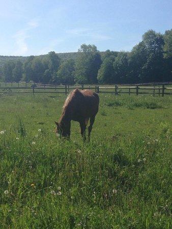 Mountain Horse Farm B&B and Wellness Retreat: Beautiful creatures