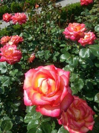 Rose Garden (Rosengarten): belissimo jardim...