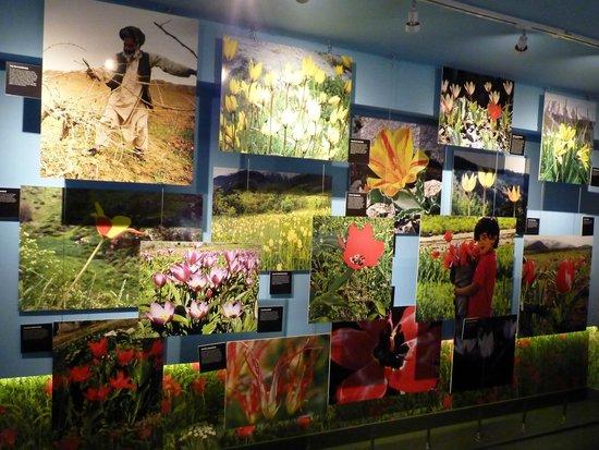 Amsterdam Tulip Museum: just pictures