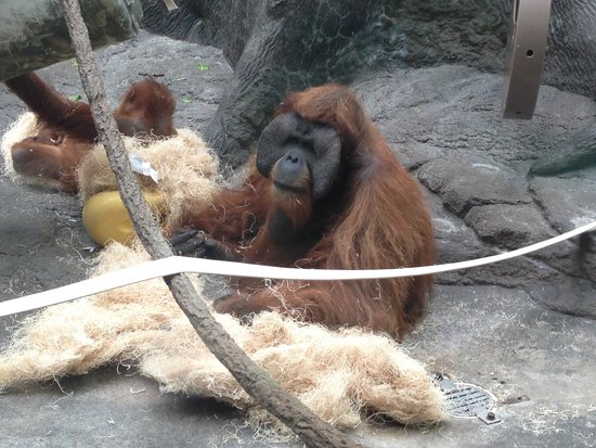 St. Louis Zoo: This guy was fun to watch.