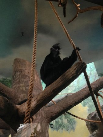 St. Louis Zoo: Primates exhibit