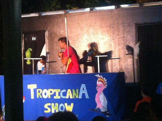 Diverhotel Aguadulce: Show de Papagayos