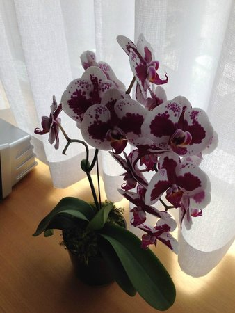 Hotel Le Germain Maple Leaf Square: orchids!