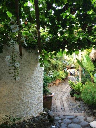 The Temple Lodge: Vegetazione
