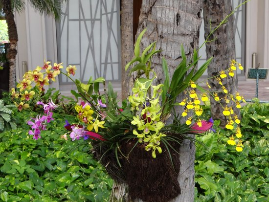 Hyatt Regency Maui Resort and Spa: Beautiful flowers everywhere!