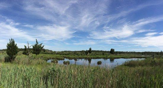 Cattus Island County Park: Cattus Island
