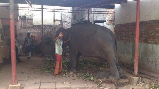 Temple bouddhiste de Gangaramaya : Ganga the baby elephant