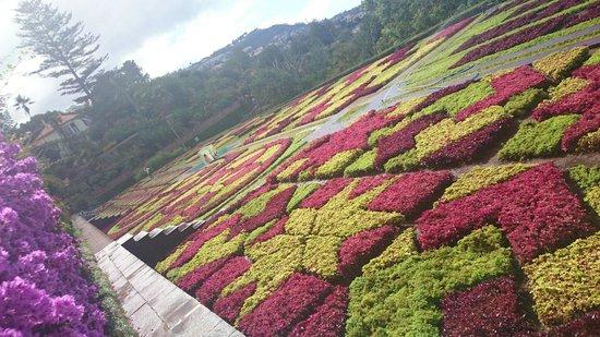 Madeira Botanical Garden : Amazing gardens