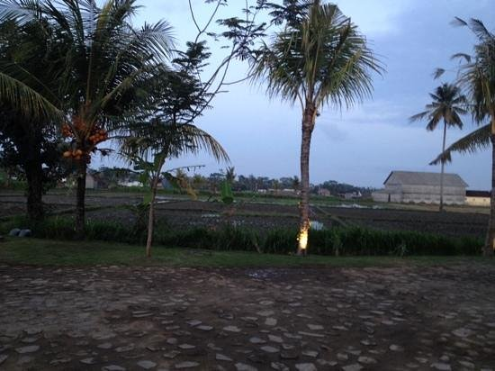 Anulekha Resort  and Villa: view from resort