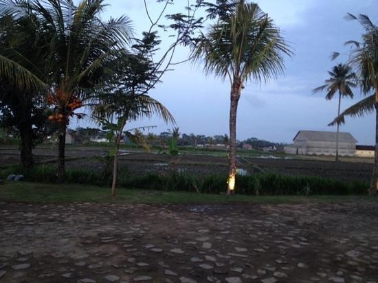 Anulekha Resort  and Villa : view from resort