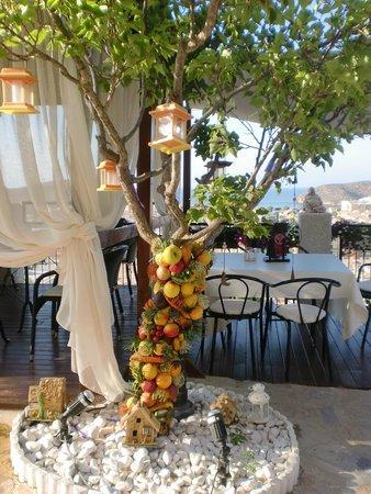 Hotel La Cumbre: arbol