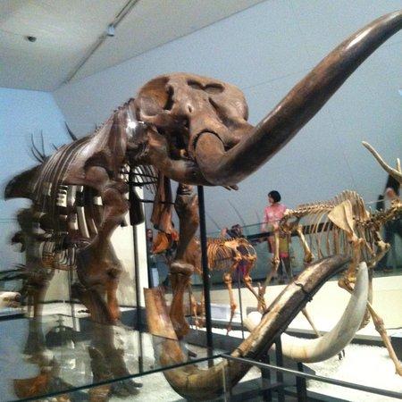Royal Ontario Museum: dinosaurios at ROM