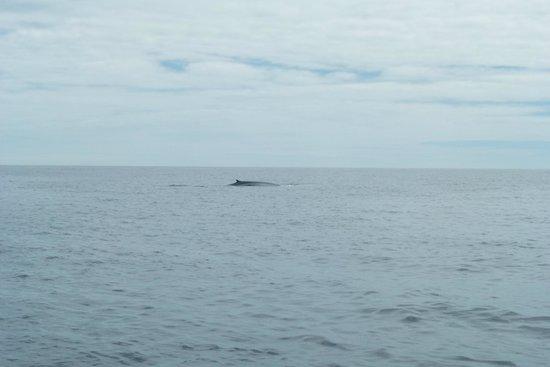 Azoren Walbeobachtung Terra Azul: Blauwal