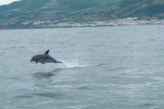 Azoren Walbeobachtung Terra Azul: Delfin