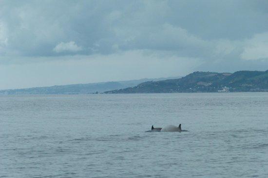 Azoren Walbeobachtung Terra Azul: Schnabelwale