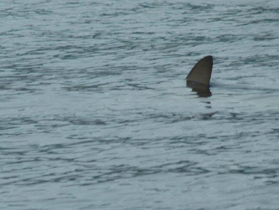 Terra Azul Azores Whale Watching: Hai