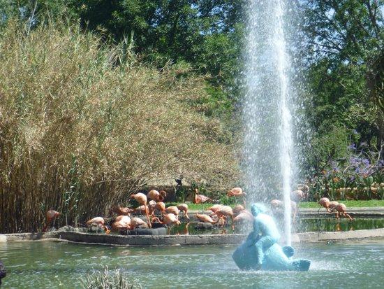 Zoologico Guadalajara: jardín Zoológico de Guadalajara