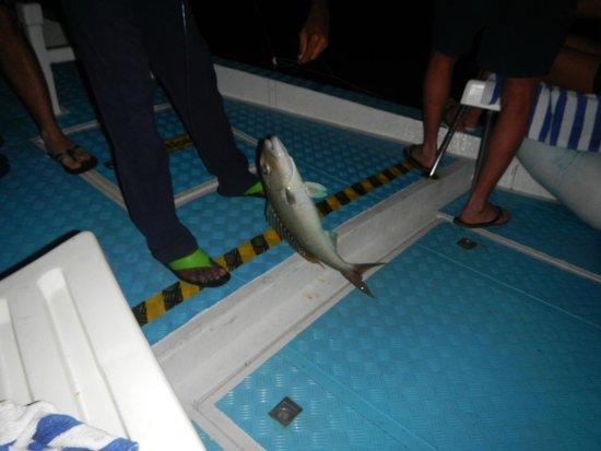 Holiday Island Resort & Spa: Pesca