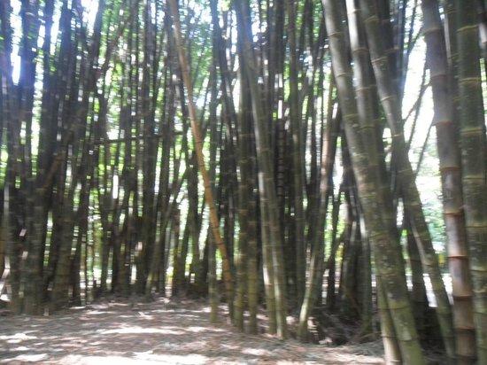 mini jardim botanico:Botanical Garden (Jardim Botanico): Jardim botânico