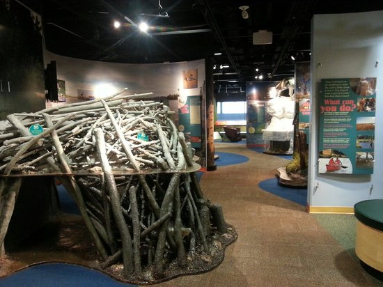 Bow Habitat Station: Very cool interactive exhibits