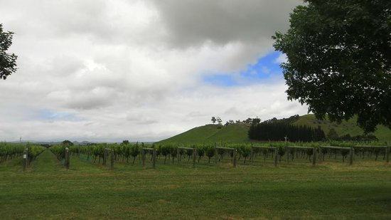 Te Awa Winery Restaurant & Cellar Door: The vineyards