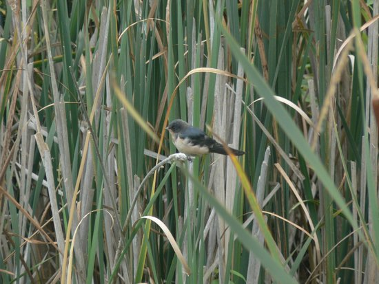 Point Pelee National Park : Visitor to the park