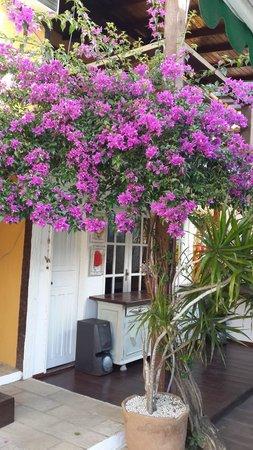 Pousada Kilandukilu: Flores o ano todo!