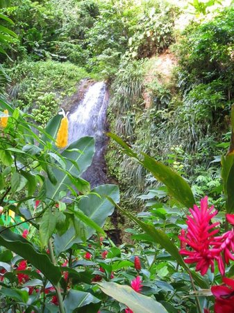 Real St. Lucia Tours : Toraille waterfall