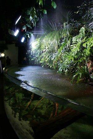 Aquarium de Paris - CineAqua : Já no final da visita