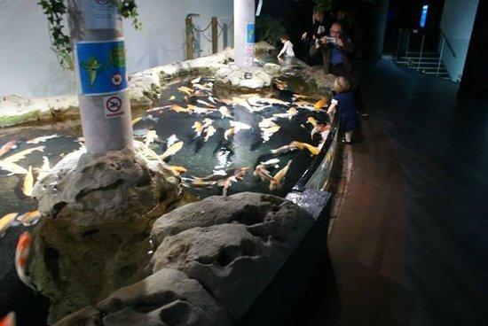 Aquarium de Paris - CineAqua: Tanque para que as crianças e adultos tenham acesso aos peixes e deixam você passa a mão neles