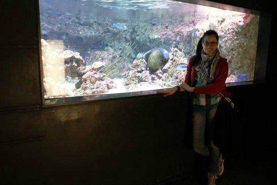 Aquarium de Paris - CineAqua: Lindos