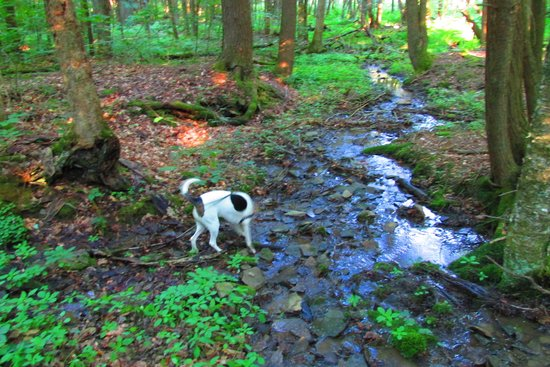 Gilbert Lake State Park: lots of streams along the trails