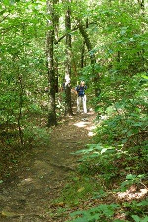 Amicalola fall: The trails