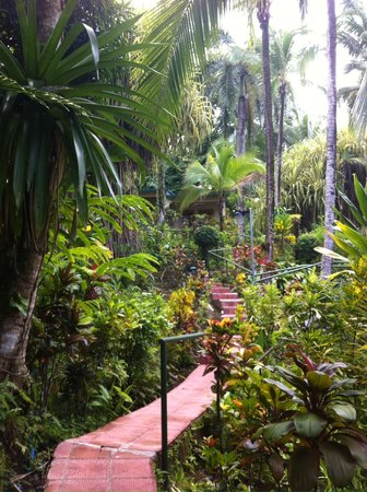 Falls Resort at Manuel Antonio: walking up to our standalone bungalow