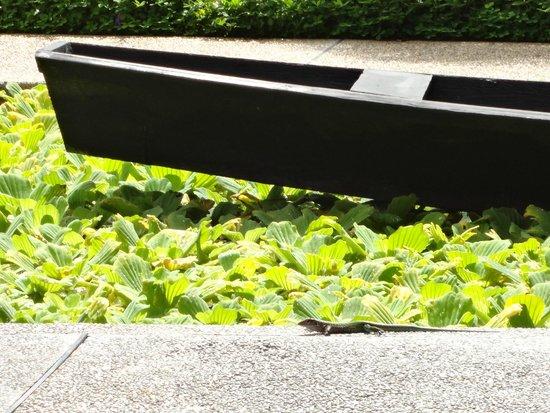 Decameron Decalodge Ticuna : Lago artiificial com barco e chafariz