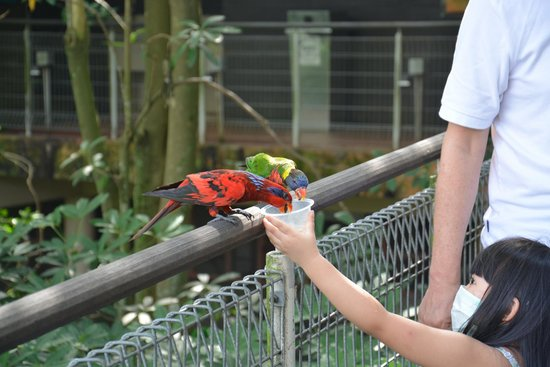 Jurong Bird Park: They will pose