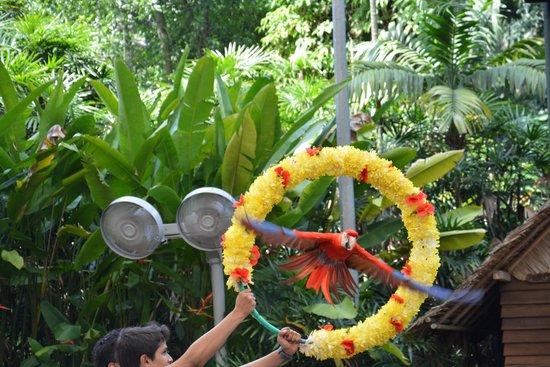 Jurong Bird Park: 'Bird's Show'