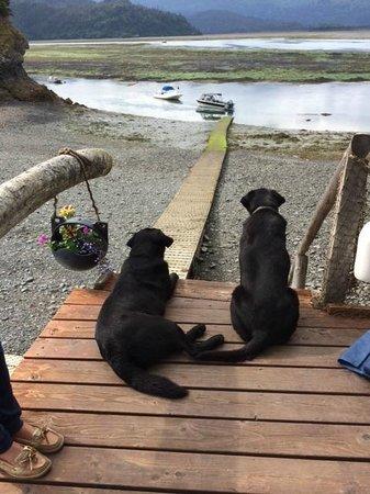 Kachemak Bay Wilderness Lodge: Lodge dogs