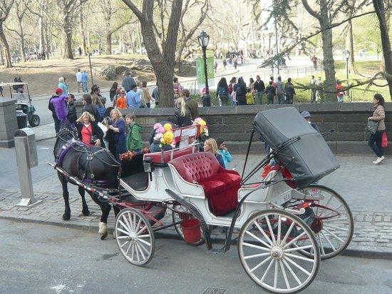 Central Park: Charretes ao redor do parque!