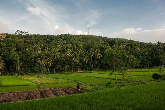 Green View Home Stay: Paddy fields nearby the villa