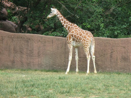St. Louis Zoo: Zoologico de san Luis Missouri