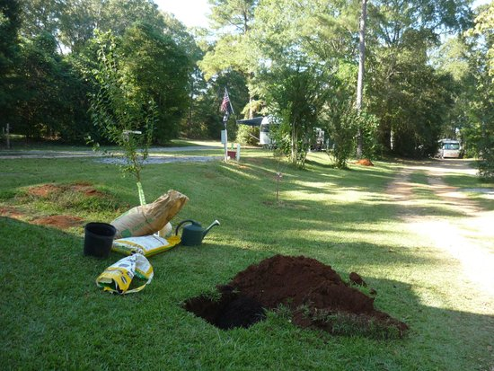 Kountry Air RV Park: Planting fruit trees