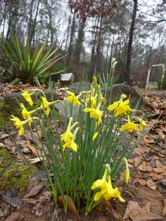 Kountry Air RV Park: Spring flowers