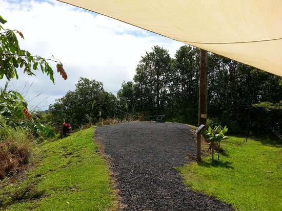 Skyline Eco Adventures - Akaka Falls: They do provide some shade along the route.  And they go rain or shine.