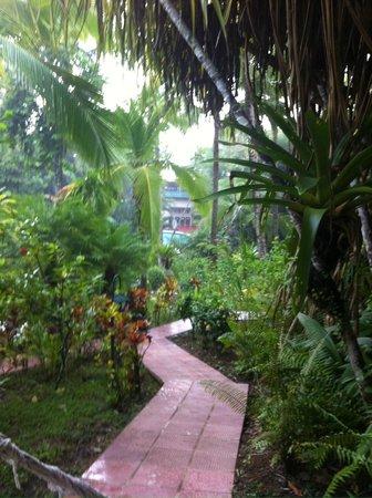 Falls Resort at Manuel Antonio : Pathway to our bungalow