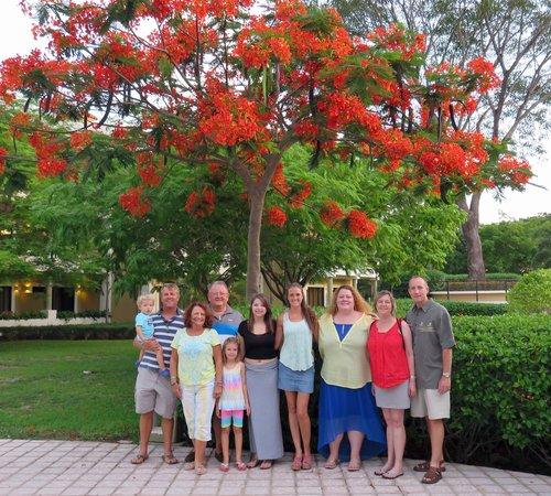 The Westin Golf Resort & Spa, Playa Conchal: My favorite tree!